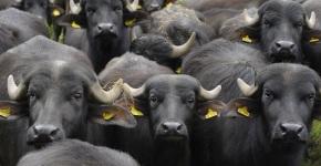 The Black List. I siti italiani che diffondono bufale. Ecco l'elenco completo di chi inventa lenotizie